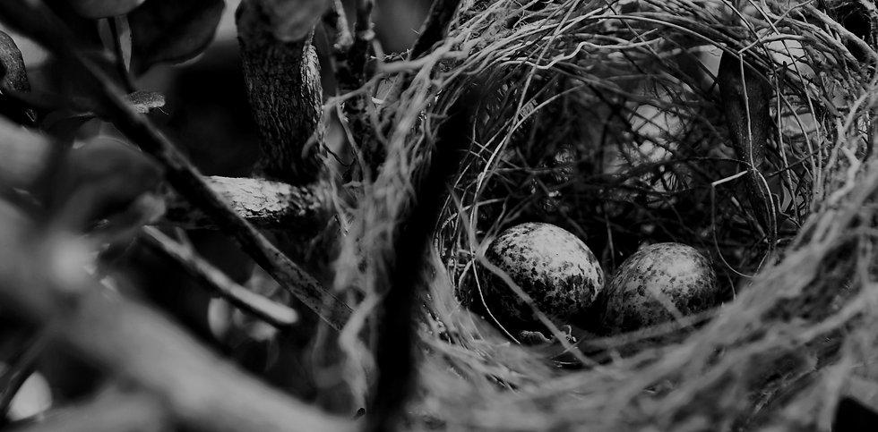 nest_edited.jpg
