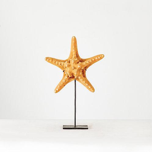 Starfish w/ stand