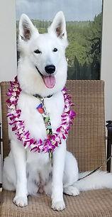 Haukea Hawaii_edited.jpg