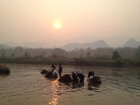 More Elephants!!!!