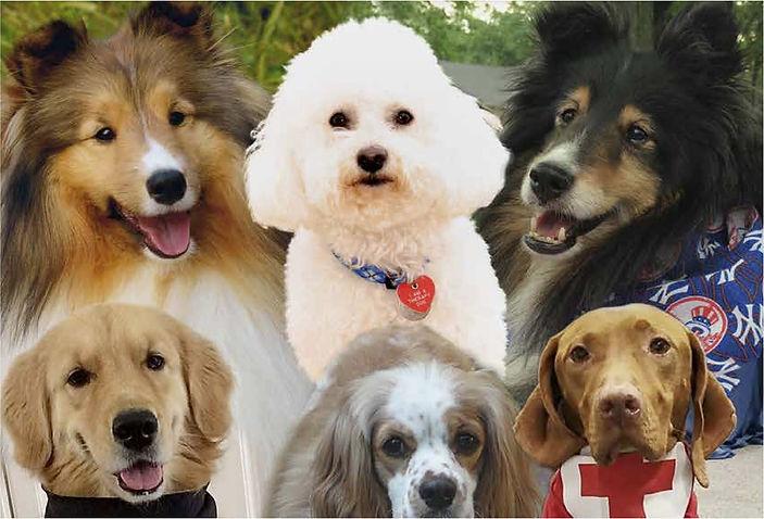 Alliance of Therapy Dogs  Topeka Kansas