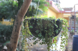 Hanging Nature