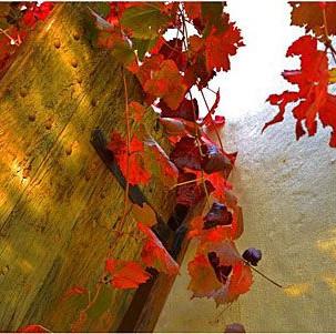 Joubert Tradouw R62 Wines Barrydale