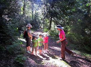 Grootvadersbosch Nature Reserve.jpg