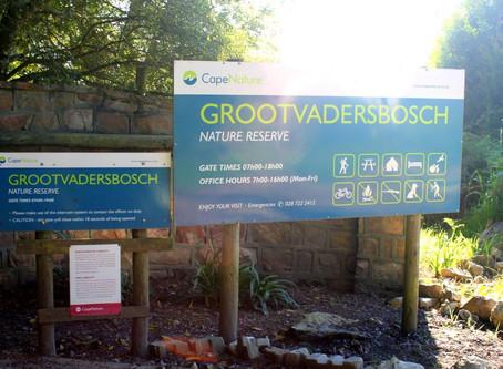 Grootvadersbosch Nature Reserve