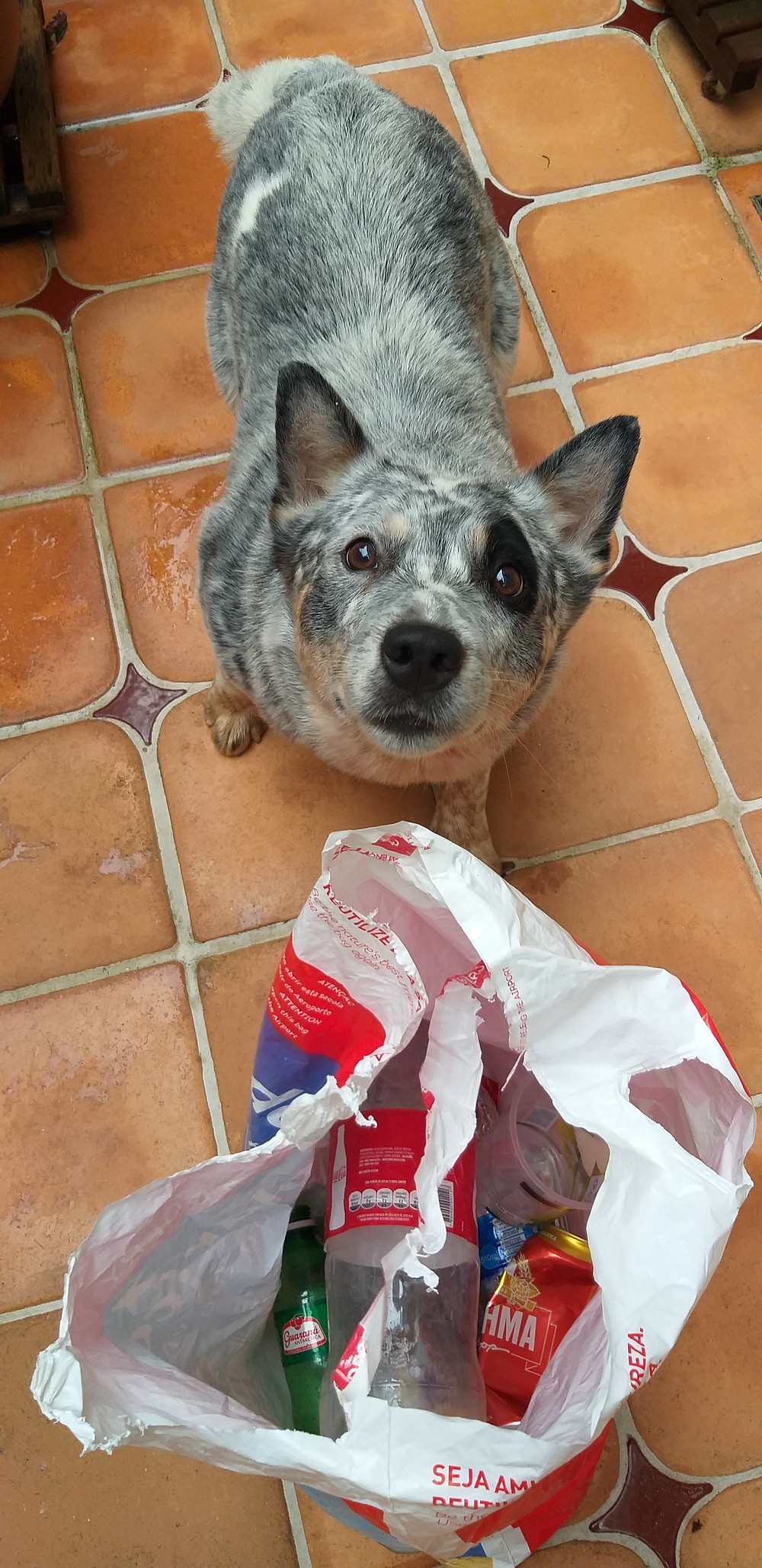 Cachorro ao lado de sacola com lixo recolhido durante atividade do dia mundial da limpeza 2019.