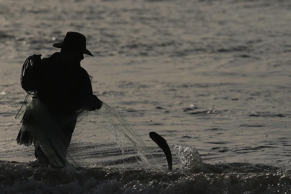Pescador artesanal usando tarrafa para capturar tainhas na Barra do Rio Tramandaí, RS