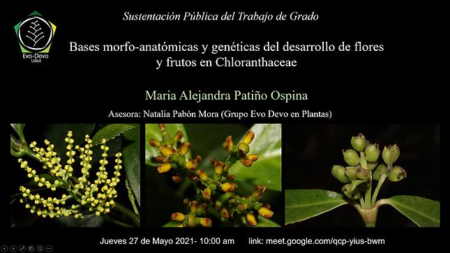 Chloranthaceae defensa.tif