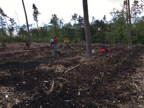 Waldpflege-Projekt in Neuenhain