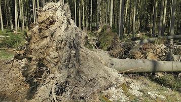 forest-716699_1920.jpg
