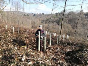 Waldpflege in Altenhain