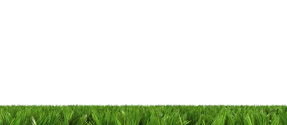 Photo of green grass in narrow strip emulating thick pile carpet on white background.
