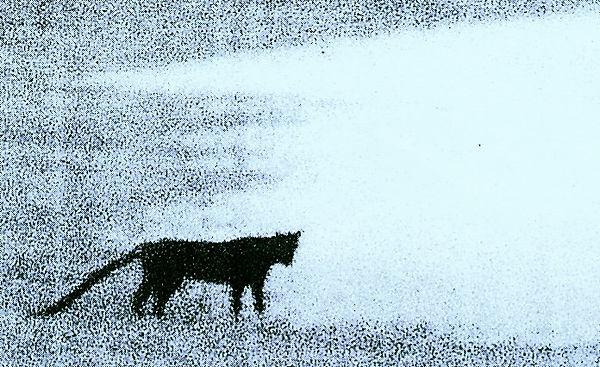 BIG CAT (I KNOW WHAT I SAW)