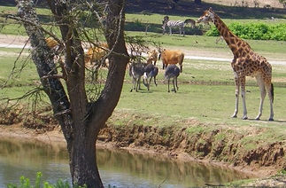 1_badoca-safari-park-lago-animais-gerafa