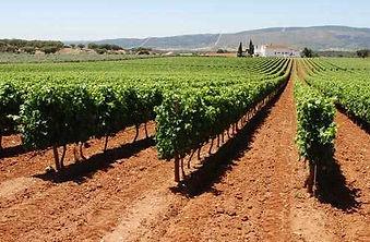 vinho3.jpg