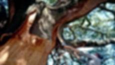 cortiça 2.jpg