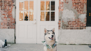 ALL THE GOOD BOIS AND GIRLS - HOW TO INCLUDE YOUR DOG IN YOUR ENGAGEMENT SESSION