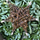 Thumbnail: Natural  Willow Star 20 cm