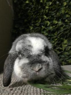 Snuggly Bunnies Binky