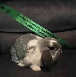 Snuggly Bunnies Beautiful Trauma