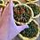 Thumbnail: Carrot and parsley Tarts