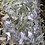 Thumbnail: Willow Chew stix and Leaf Bundle