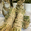 Thumbnail: Single Hay Bundle Toss