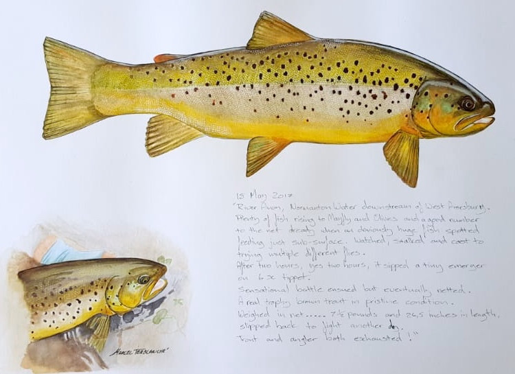 Fly fishing artwork by Marcel Terblanche