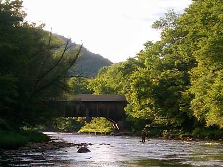 The Beaverkill river
