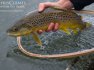 Fishing for brown trout with cane rods