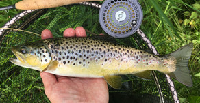 Silk Fly Line Review by Richard Gill