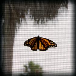 11-Butterfly