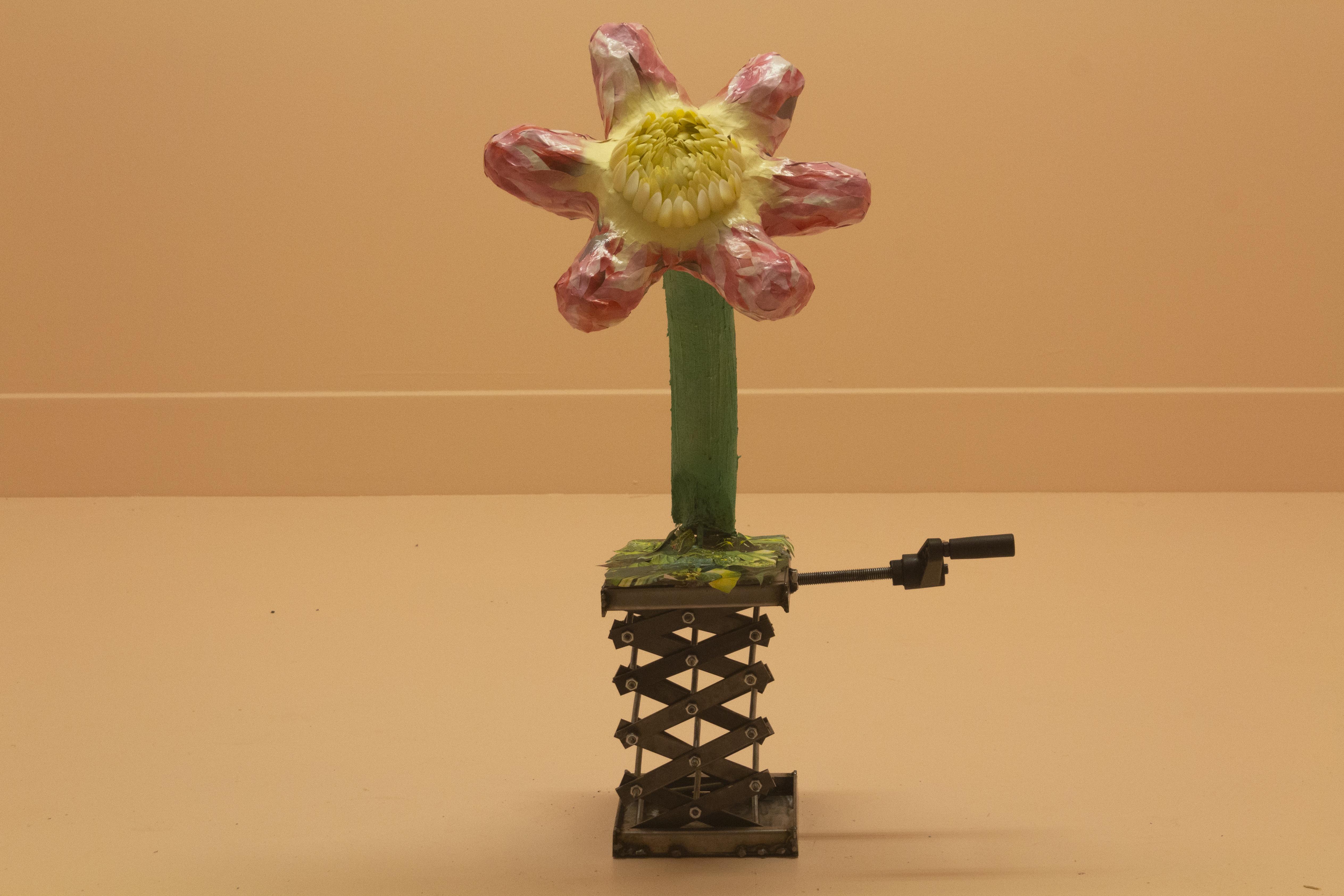 Basic Bloom
