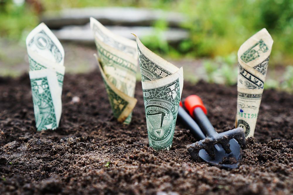 Four dollar bills buried in soil