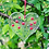Thumbnail: Cute little flower hearts