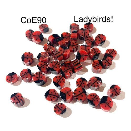 CoE90 Ladybird Murrini
