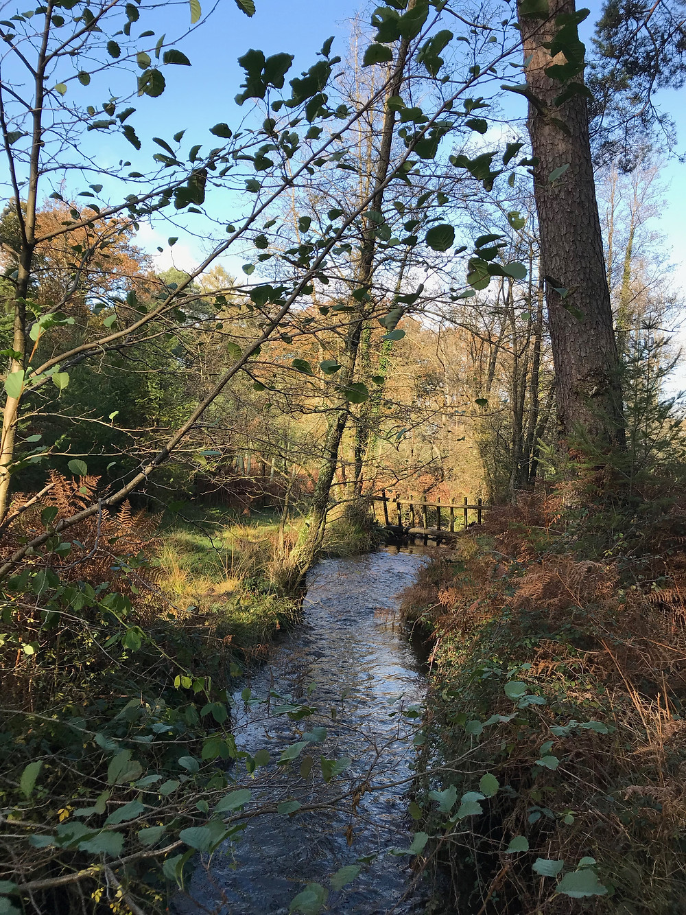 Mindfulness in the New Forest, near Totton Southampton