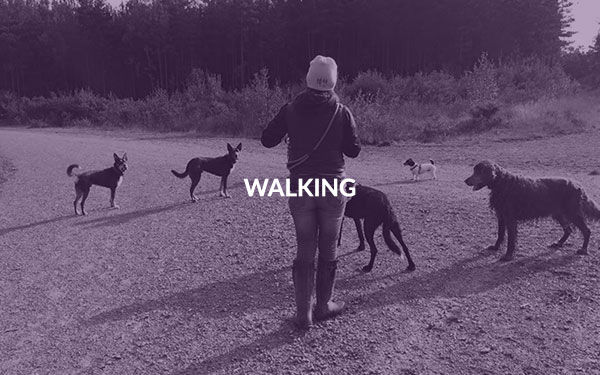001walking.jpg