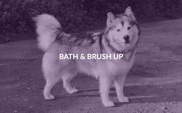 001bathnbrush.jpg