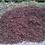 Thumbnail: Coillte Bark Mulch Loose Per Tonne