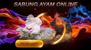 CARA BERMAIN SABUNG AYAM