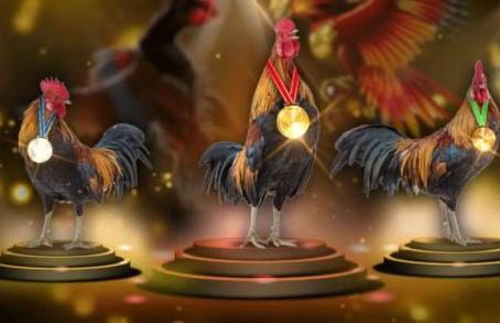 Memelihara ayam desa adalah keuntungan