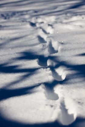 Traces dans neige.jpg