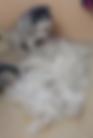 Screen Shot 2020-02-21 at 8.17.13 PM.png