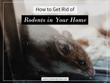 How to Get Rid of Rodents in Your Home