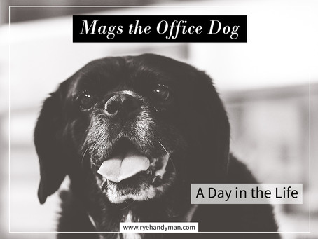 A Day in the Life of a Handyman Office Dog