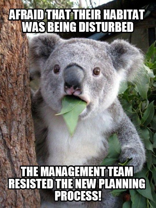 Project, Program and Portfolio Management meme