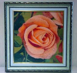 New Pink Rose Golden Kite 450