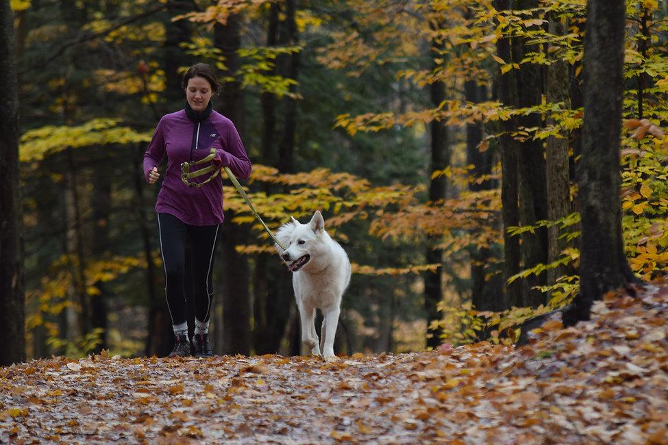 jogging4.jpg