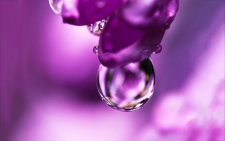 flower-pink-water-drop.jpg